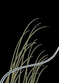 Duinweide logo